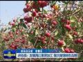 府谷县:发展海红果深加工 做大做强特色品牌